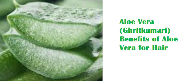 Aloe Vera (Ghritkumari) Benefits of Aloe Vera for Hair