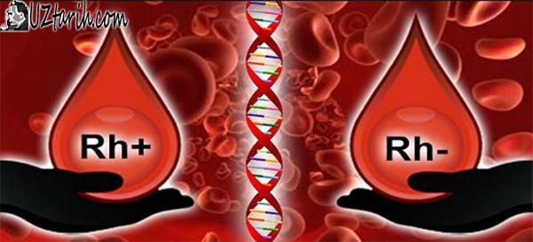 kan grupları, blood types