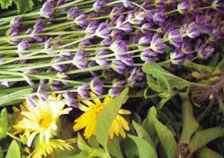 Τα αρωματικά φυτά της Ελλάδας
