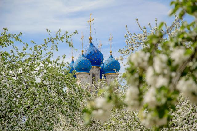 Яблони в Коломенском