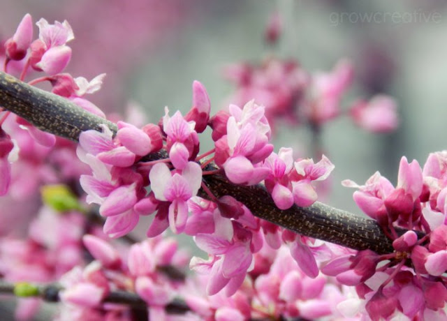 pink blossoms: grow creative blog