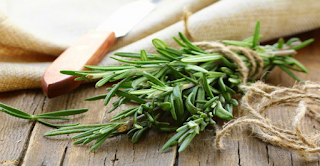 Rosemary Prevents Cancer