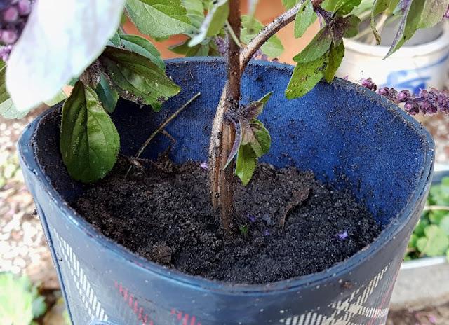 DIY: Schnell mal einen Stiefel bepflanzen. Die Blume in den alten Stiefel pflanzen und genügend Gießrand lassen.