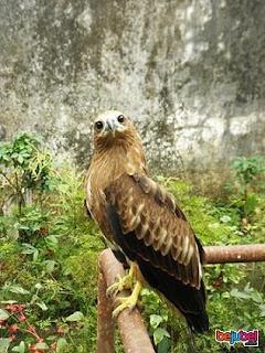 100 Gambar Binatang Burung Peliharaan HD Terbaik