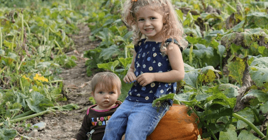 It's time for a ride to the pumpkin patch!