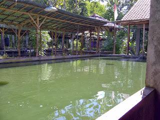 Umpan-Ikan-Patin-Kolam-Air-Hijau