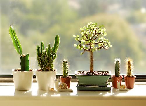 Resultado de imagem para decor plantas
