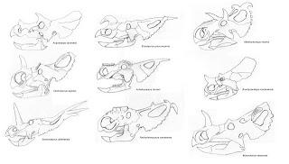 Resultado de imagen para skulls ceratopsia