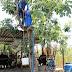 ''SUSUZLUK ÇİLESİ'' incir ağacının tepesine çıkardı