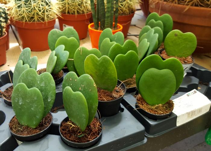 Les presento el para so de los cactus y suculentas soy for Curso cactus y suculentas