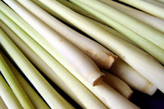 Fresh Lemongrass prior to Essential Oil extraction