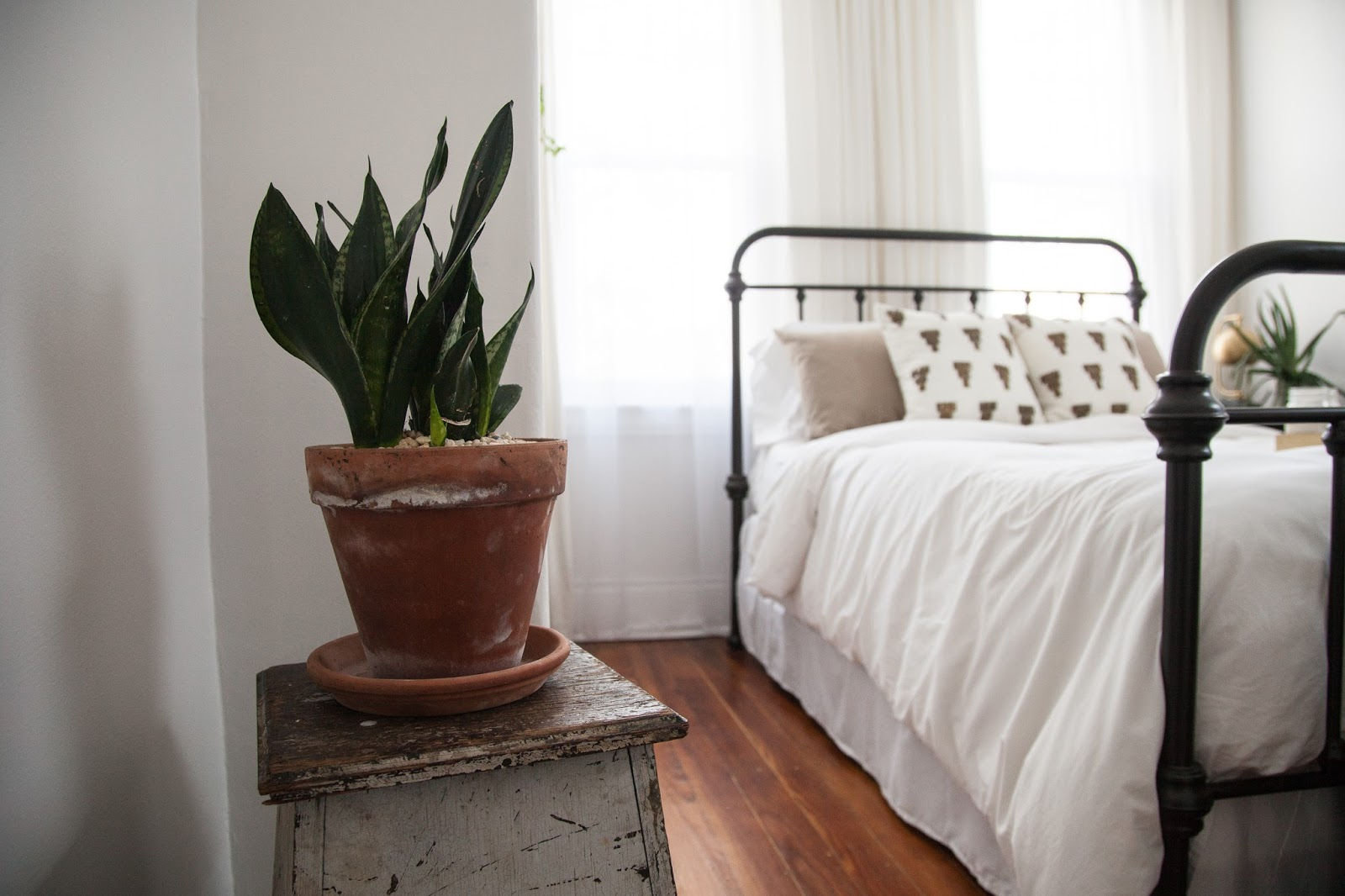 Bright Guest Bedroom with Snake Plant