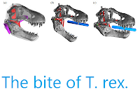 http://sciencythoughts.blogspot.co.uk/2012/02/bite-of-t-rex.html