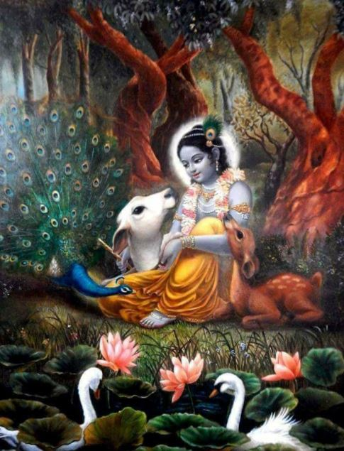 Top 50 Best Lord Krishna Images And Pics Hd 2018 Happy New Year 2019