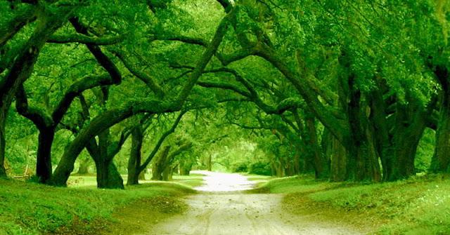 أورتن بلانتيشن درب كارولينا الشمالية ,الولايات المتحدة الأمريكية Orton Plantation Driveway North Carolina, Usa