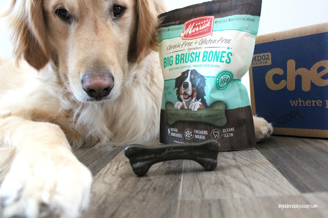 Merrick big brush bones for large dogs chewy.com review