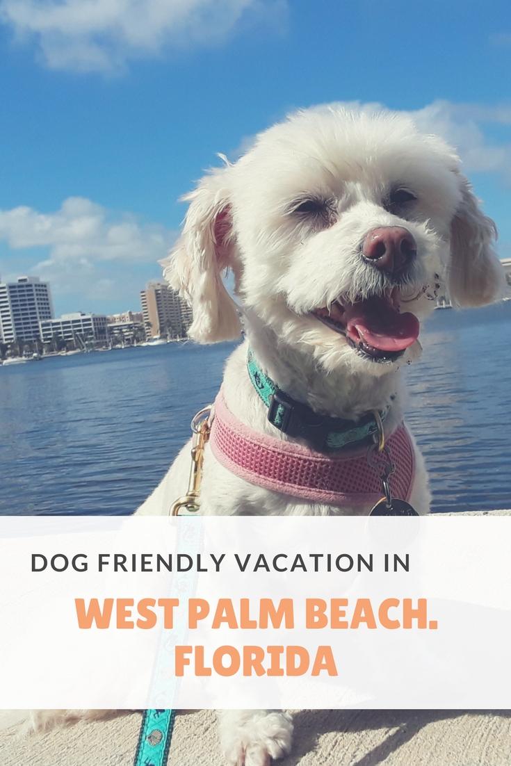 Dog Friendly B B Long Island Ny