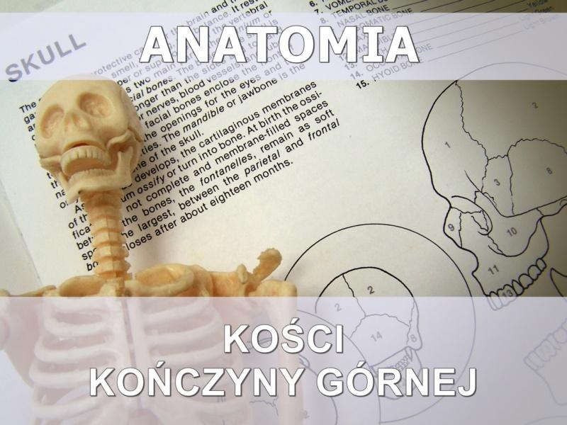ściąga z anatomii - kończyna górna