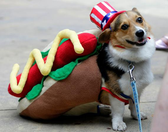 σκυλιά απόκριες