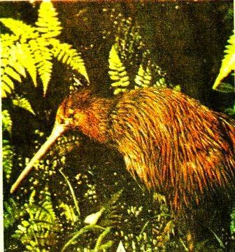 tiap organisme makhluk hidup mempunyai sistem koordinasi yang disebut koordinasi indra unt Sistem Indera (indra) pada Hewan