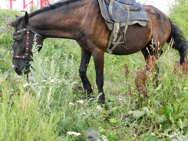 Аркаимский конь