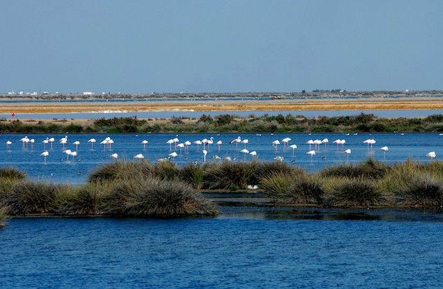 El Parque Nacional y Natural de Doñana