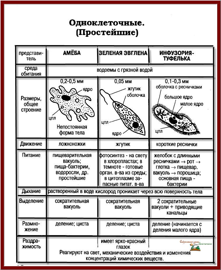 ботаника в таблицах схемах тестах и терминах новый находится складе