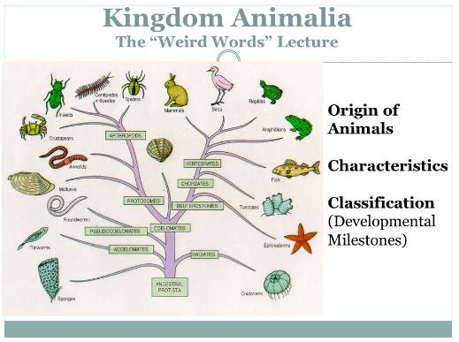 Pengertian Kingdom Animalia Beserta Ciri Dan Klasifikasinya Terlengkap