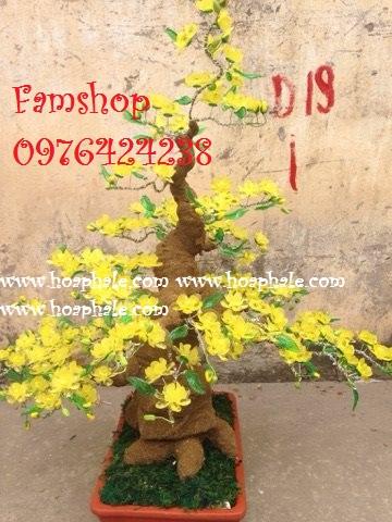 Goc bonsai cay hoa mai tai Tran Dang Ninh