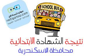 نتيجة الشهادة الابتدائية برقم الجلوس - محافظة الاسكندرية