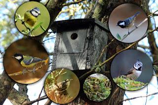 Proyecto cajas nido