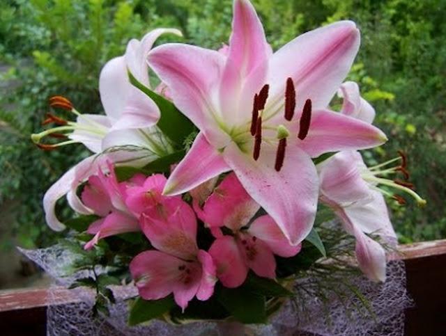 Bunga Lili Merah Putih Pink Kuning Bakung