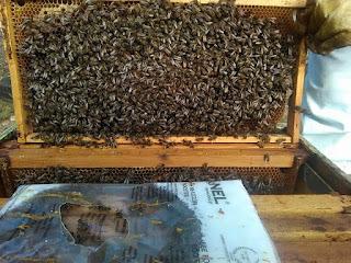 Τροφή Booster της Anel αυτό που χρειάζεται η μέλισσα αλλά και ο μελισσοκόμος