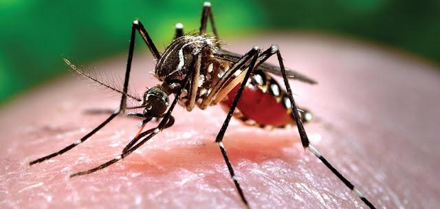 6 άνθρωποι πέθαναν την τελευταία εβδομάδα από τον ιό του Δυτικού Νείλου