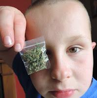 baggie of weed ganja marijuana