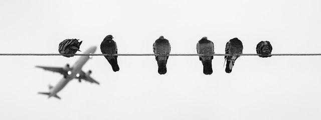 Reglamento (CE) nº 261/2004: Circunstancias extraordinarias y colisiones entre aves y aeronaves