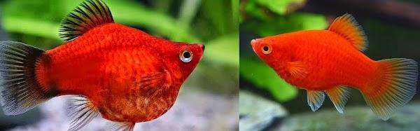 Apa Ciri-Ciri Kelompok Pisces dan Sebutkan Contoh & Pengelompokannya