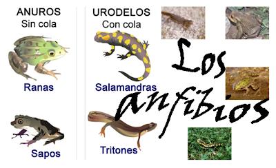 http://ceiploreto.es/sugerencias/cplosangeles.juntaextremadura.net/web/curso_3/naturales_3/anfibios/anfibios.html