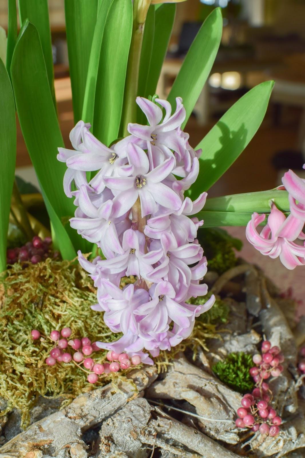DIY : Frühlingsdeko selber machen Frühjahrsdeko für Tisch und Esszimmer. Dekoidee mit Korb Christrosen Hyazinthen Geweih Moos und natürlicher Deko