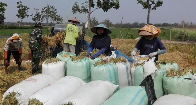 Subsidi benih bagi empat poktan di kecamatan Sulang