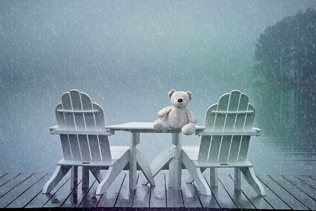 samotny miś