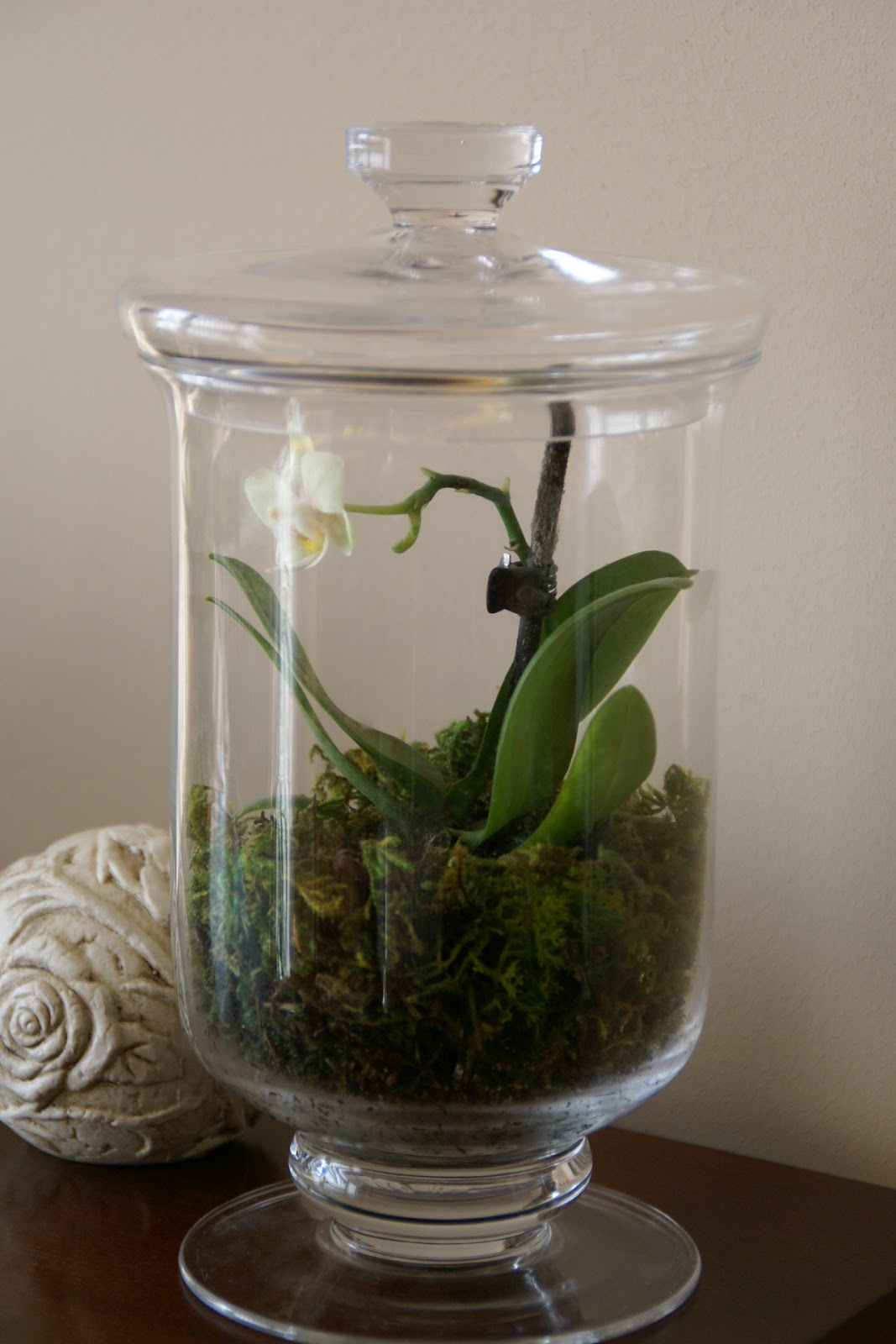 Speckled Fawn En Flower Power Terrarium Update