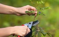 Gardening tips for pruning