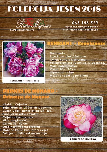 Šatirana ruža Renesans i dvobojna Princes De Monako
