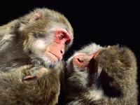 Monkeys Puzzle