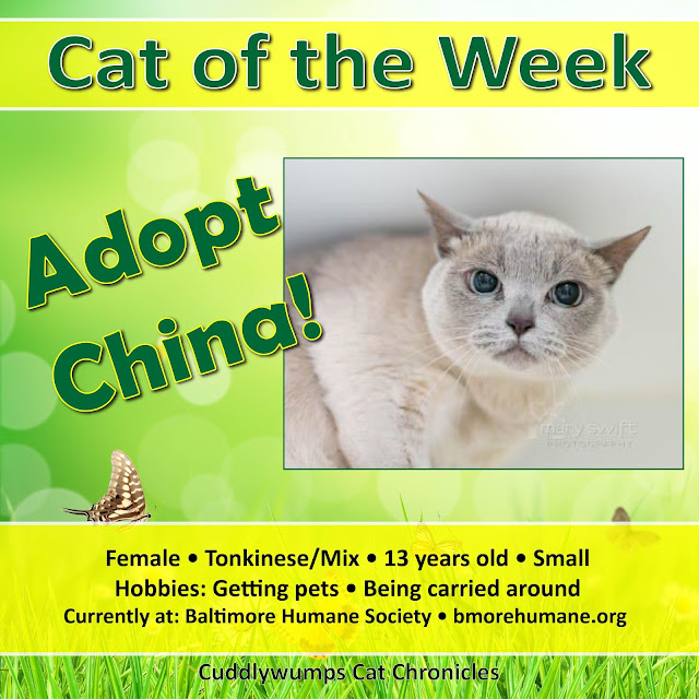 Cat of the Week: China