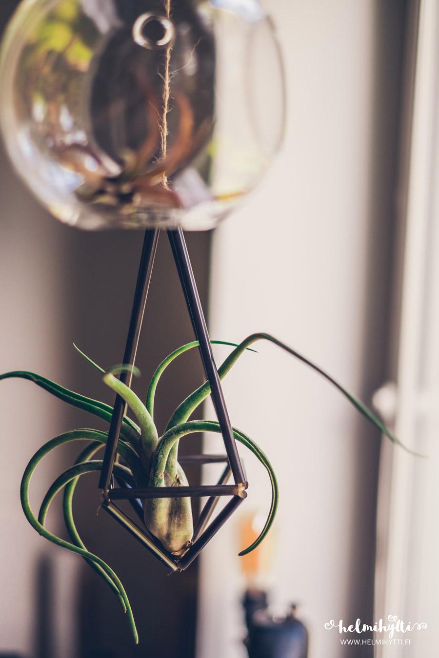 ilmakasvit-diy-amppeli