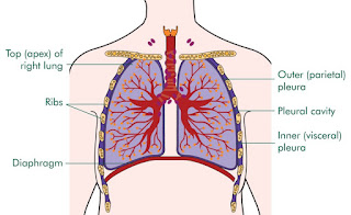 http://www.life-health-tips.tk/2016/01/what-is-it-and-and-how-is-mesothelioma.html