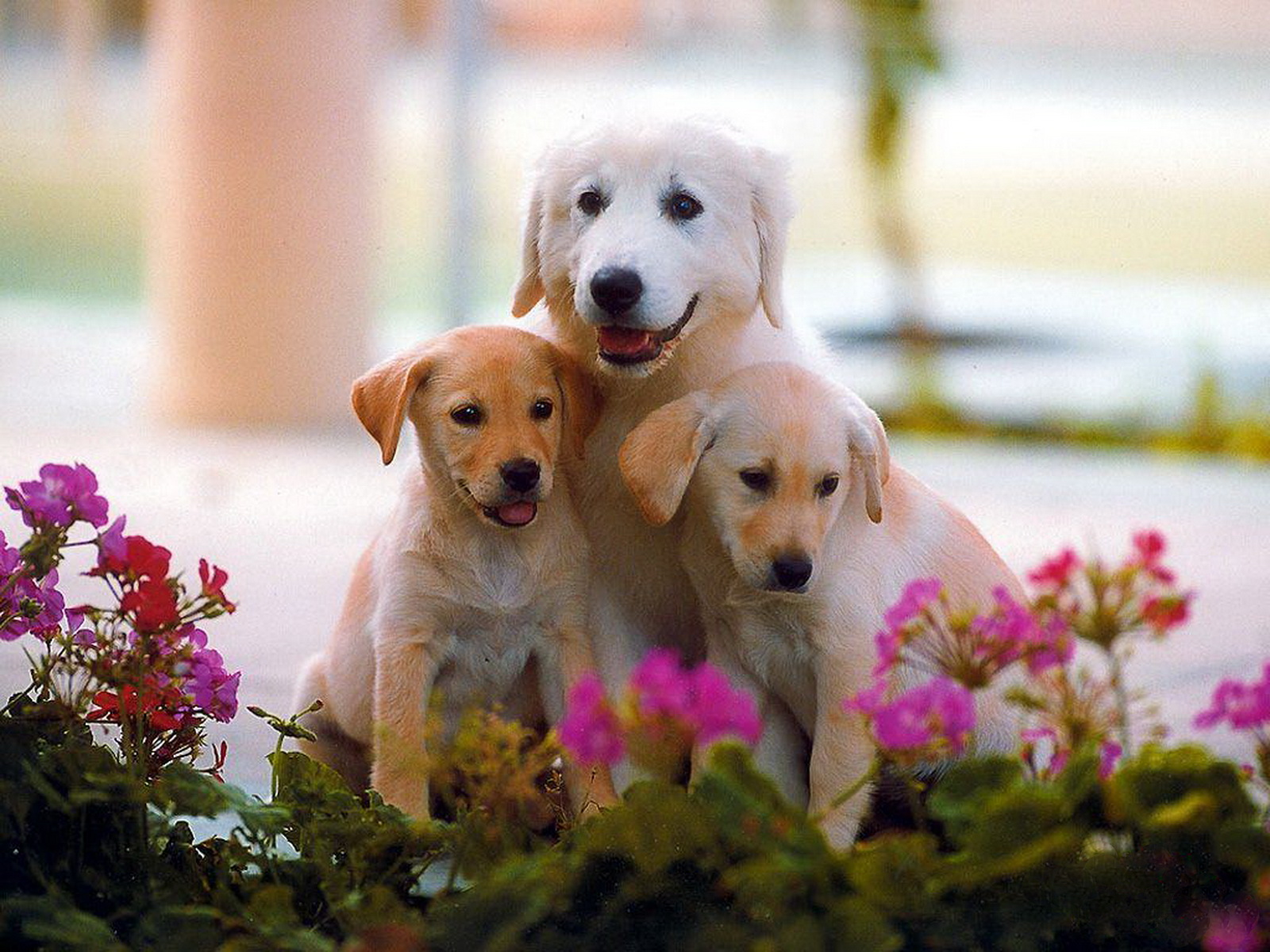WallpaperfreekS: HD Cute Dogs Wallpapers 1600X1200
