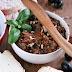 Pasta z suszonych pomidorów i oliwek